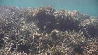 Schnorcheln in Narewa Bay, Naviti.