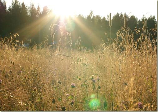 Sunny_field_by_LittleHollow