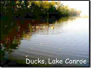 WC lake & ducks