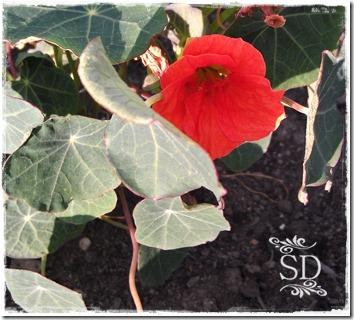 gardengrowing2