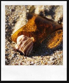 shell16