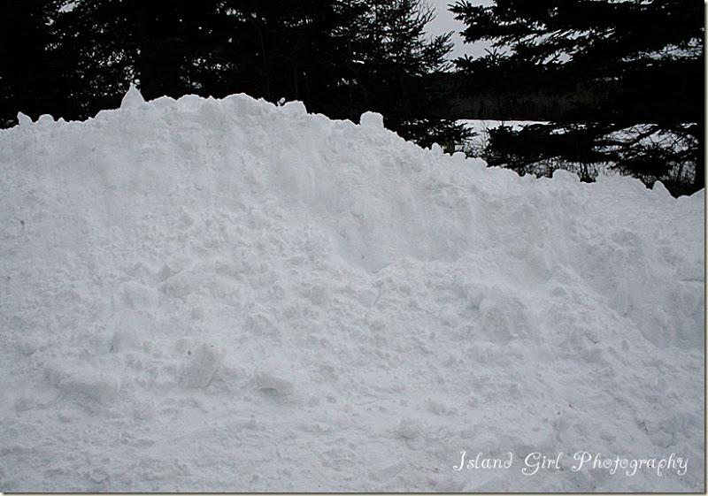 February 12, 2012 010