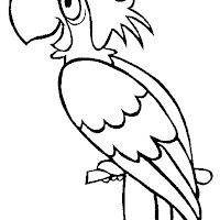 perroquet17.jpg
