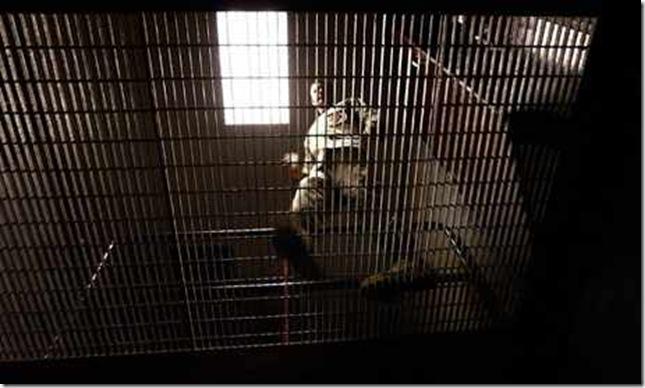 orwell prison-guar-010