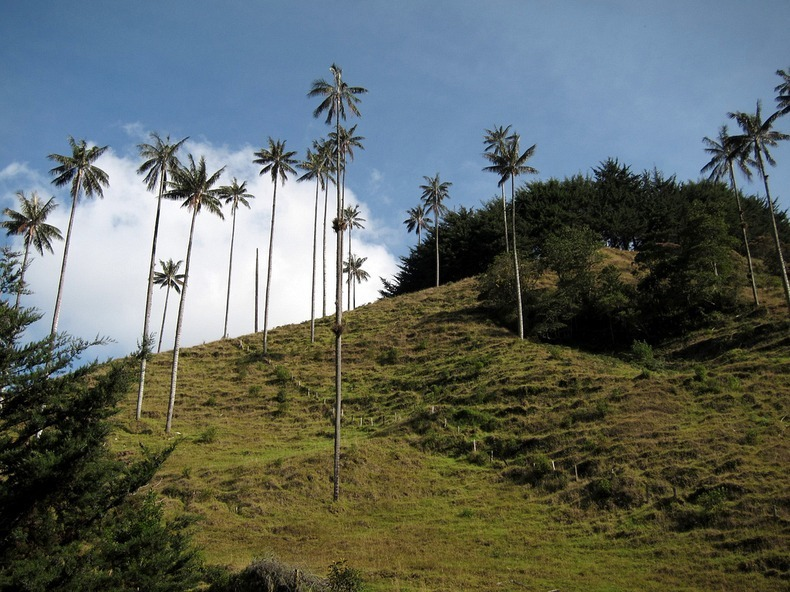 cocora-valley-10