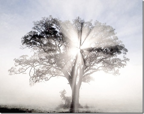 America_-_oak_tree_in_new_england_sunrise