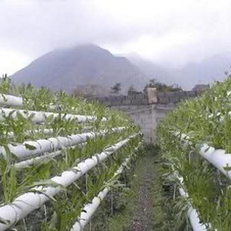 Qu son los cultivos hidrop nicos 3a y ultima parte el for Que son cultivos asociados