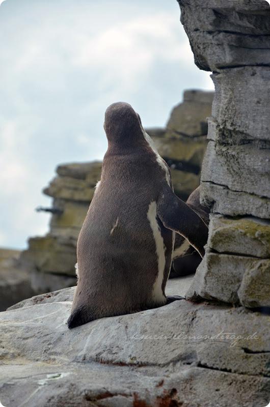 Wremen 20zwölf Tag 6 Zoo am Meer - Humboldt (4)