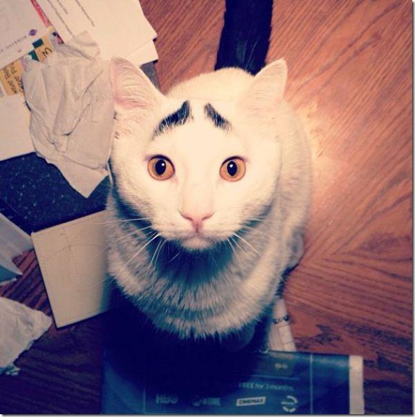 white-cat-eyebrows-21