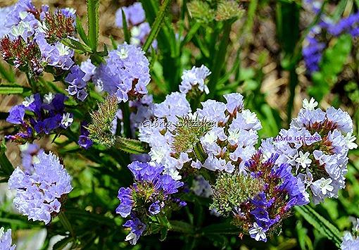 Azul - Glória Ishizaka 42