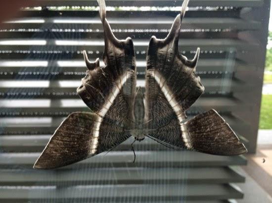 mass moth hatching