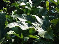 葉っぱの緑(CPLフィルタなし)
