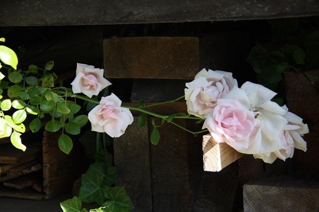 bloeiend hout