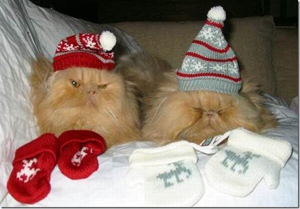 Gatos odeiam o natal (20)