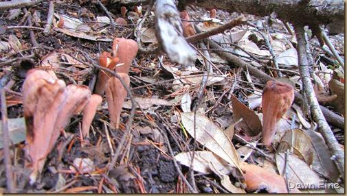 mushroom_021