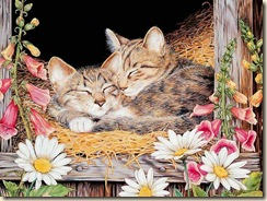 wallcoo.com_Maday_Jane_2007_Kittens_Calender-01