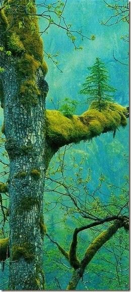 TreeswitMA29079731-0016