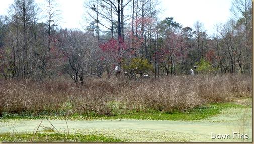 Magnolia Plantation_423