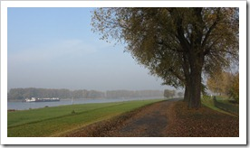 der Rhein im herbstlichen Gewand