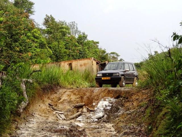 Forêt équatoriale (3)