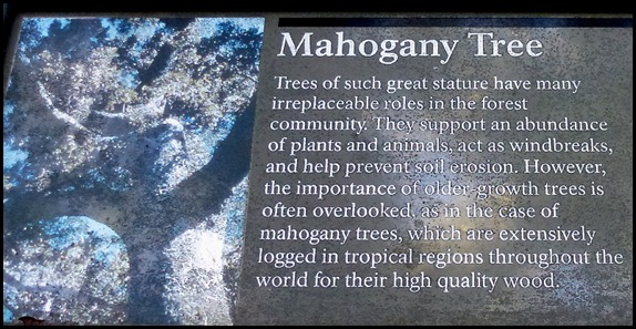 23f - Mahogany Hammock - Huge Mahogany Tree Sign