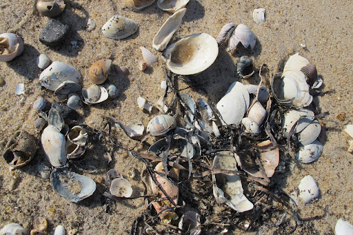 There is always an amazing assortment that washes up on the shore.