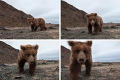 Gobi Bears