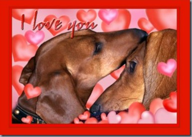 dachshund_love_valentines_day_card-p137781214947219302z857a_400