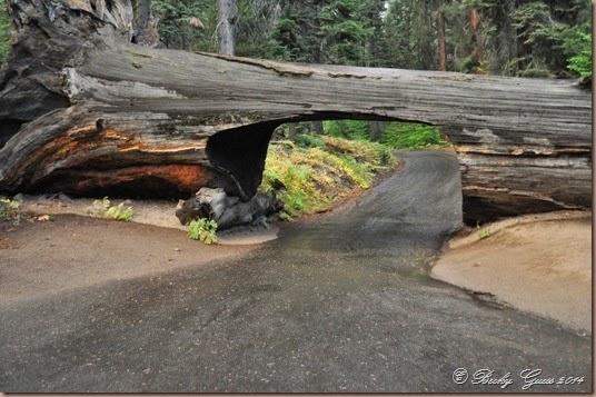 09-20-14 Sequoias 01