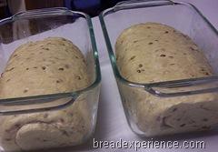 sprouted-einkorn-bread 019