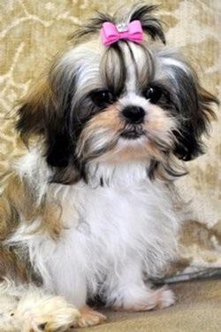 cute dog 2