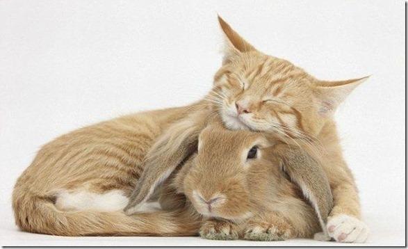 funny-animals-cute-1