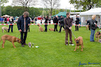 20100513-Bullmastiff-Clubmatch_30932.jpg