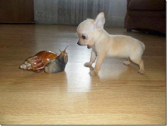 funny-animals-cute-037