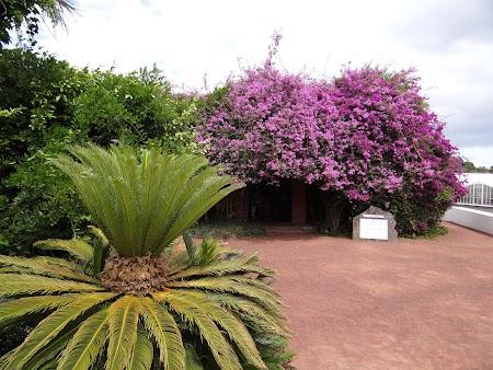 16. Plantatia de ananas.JPG