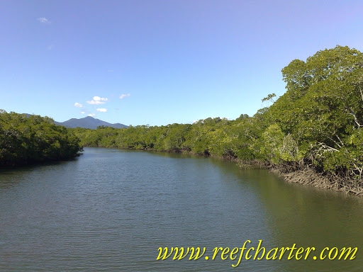 The mangroves swamps of North Queensland play an important part of the reef ecosystem