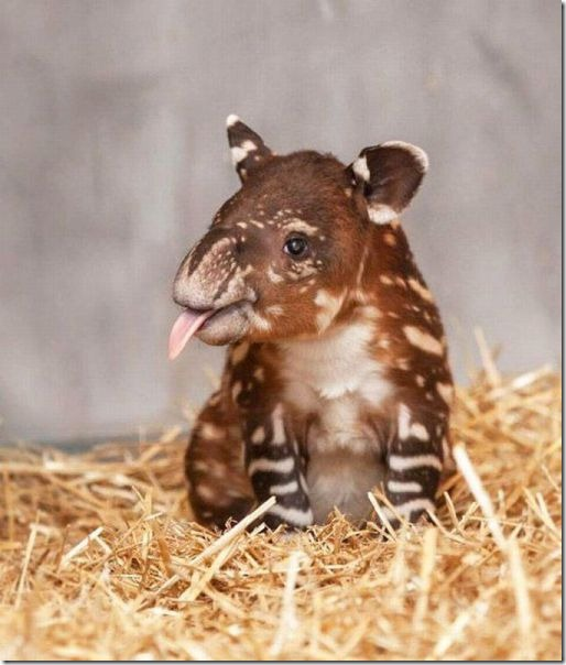 funny-animals-cute-30