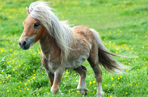 Google Pony