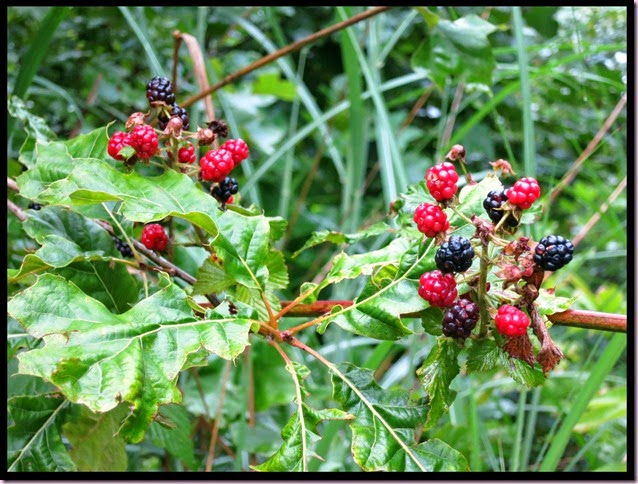 berriesIMG_6929