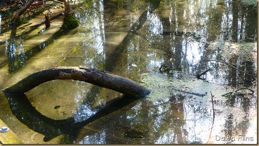Goose Creek State Park _021