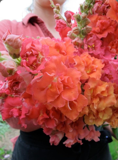 557468_416994725013929_2119815934_n madam butterfly snapdragons botanique