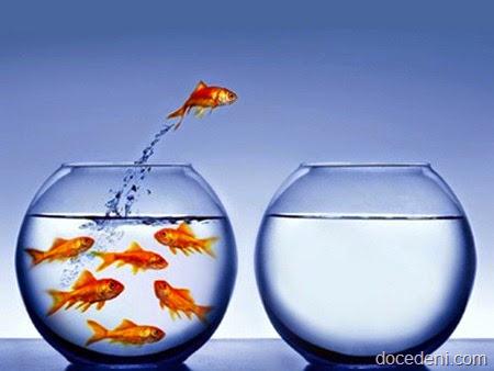 peixe-no-aquario