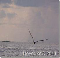Key West 072