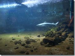 2011.11.25-004 requin