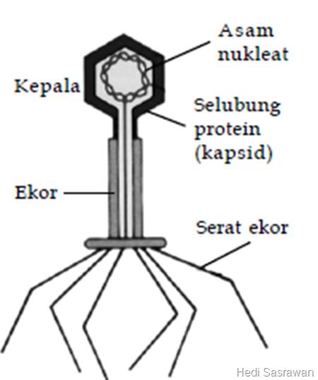 6 Struktur Tubuh Virus