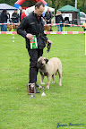 20100513-Bullmastiff-Clubmatch_30966.jpg