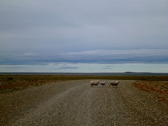 A common sight on the Patagonian roads.