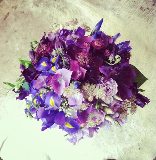 iris 532289_400598399992729_1753854047_n solabee flowers & botanicals
