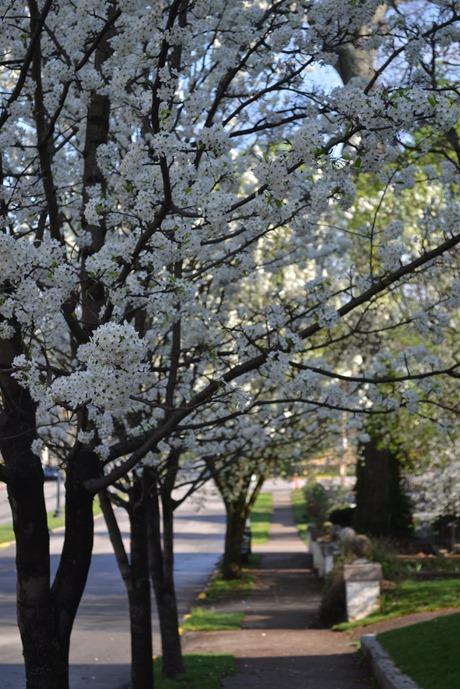 Spring 042