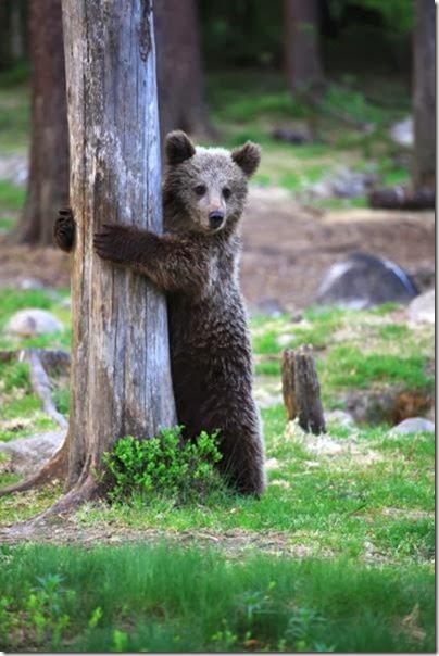 cute-baby-animals-24